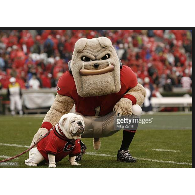 Georgia Bulldogs Mascot Costume